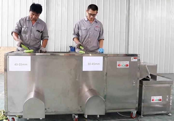 Automatic-banana-peeling-machines-of-Taizy-machinery