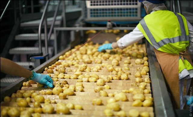 potato chips processing in Ukraine