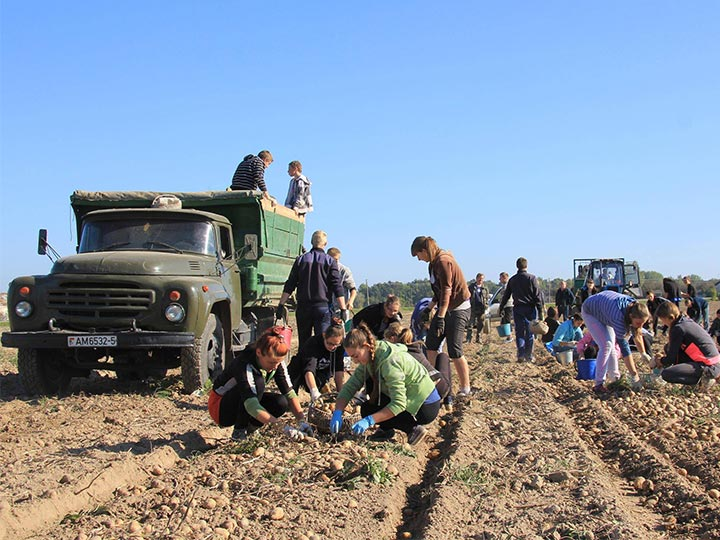 potato plantation in Ukraine