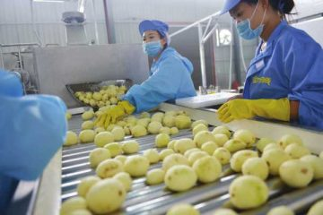 potato chips making machine for small business