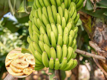 Thailand banana chips business